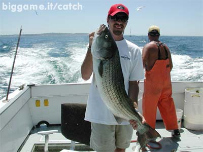 how to catch striped bass for dummies