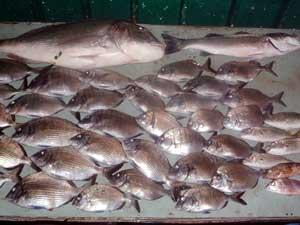 Esercitazioni per inverno pescando nero