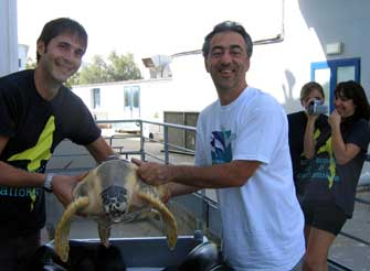 Tartaruga feggy in vasca all 39 acquario di for Tartaruga da acquario