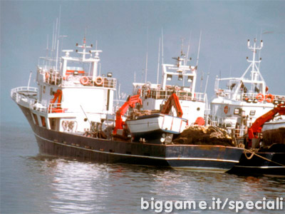 La rarefazione dei tonni reti di circuizione for Barca a vapore per barche da pesca